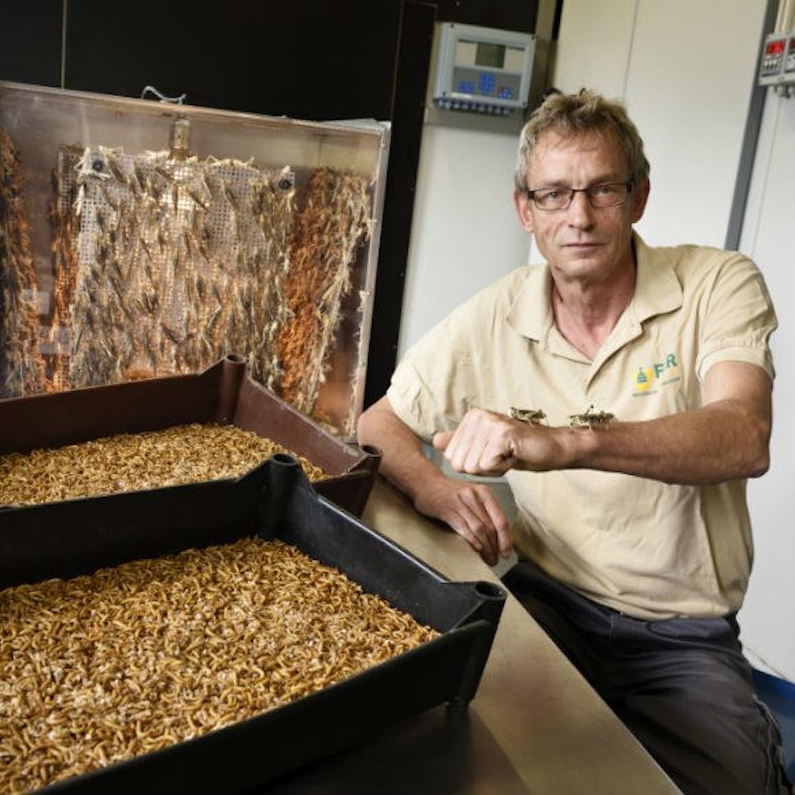 Bv OF MRE Meertens Insectenkwekerij 1 580 x 580